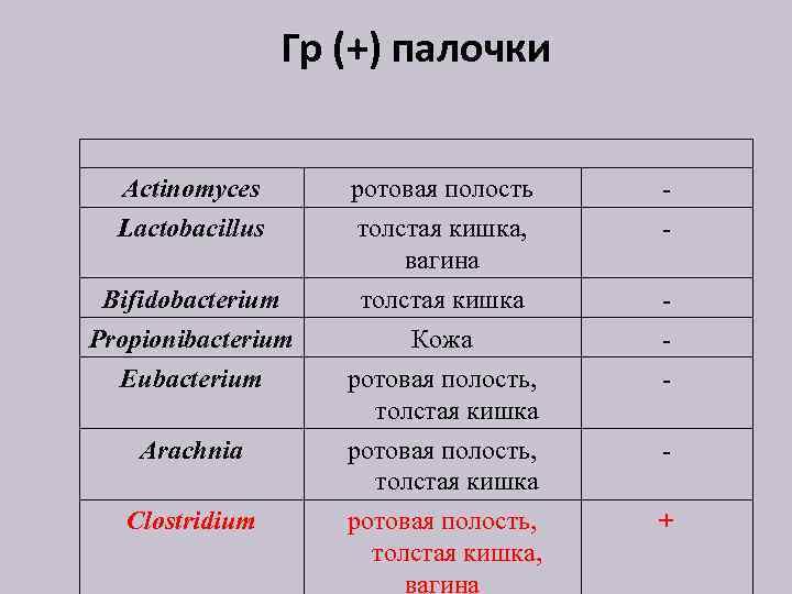 Гр (+) палочки Actinomyces Lactobacillus ротовая полость толстая кишка, вагина - Bifidobacterium Propionibacterium Eubacterium