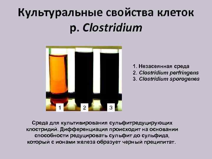 Культуральные свойства клеток р. Clostridium 1. Незасеянная среда 2. Clostridium perfringens 3. Clostridium sporogenes
