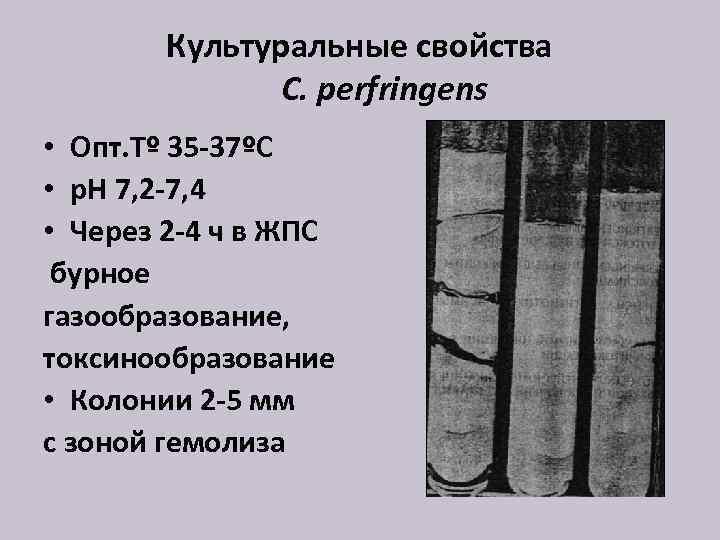 Культуральные свойства C. perfringens • Опт. Тº 35 -37ºС • р. Н 7, 2