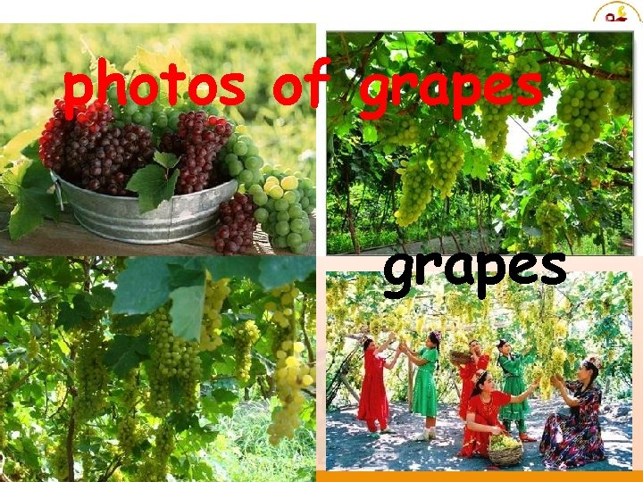photos of grapes