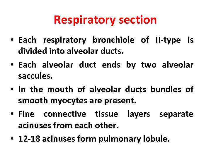 Respiratory section • Each respiratory bronchiole of II-type is divided into alveolar ducts. •
