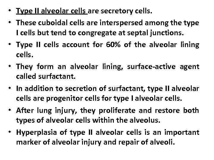 • Type II alveolar cells are secretory cells. • These cuboidal cells are