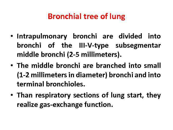 Bronchial tree of lung • Intrapulmonary bronchi are divided into bronchi of the III-V-type