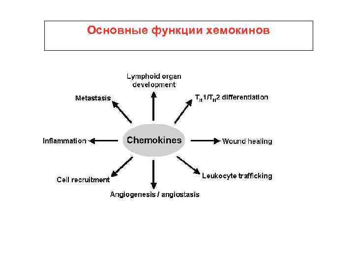 Основные функции хемокинов