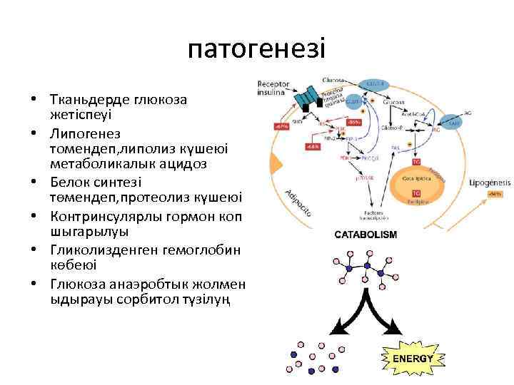 патогенезі • Тканьдерде глюкоза жетіспеуі • Липогенез томендеп, липолиз күшеюі метаболикалык ацидоз • Белок