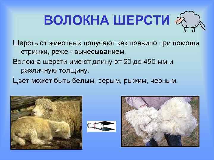 ВОЛОКНА ШЕРСТИ Шерсть от животных получают как правило при помощи стрижки, реже - вычесыванием.