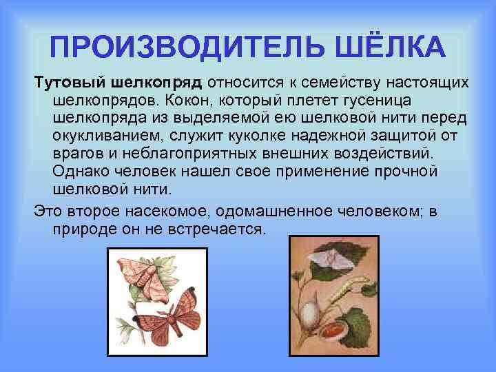 Шелкопряд плетет нить