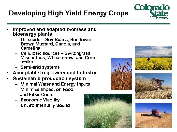 Developing High Yield Energy Crops § Improved and adapted biomass and bioenergy plants –