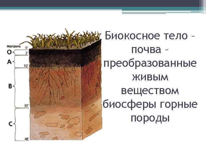 Биокосное тело – почва – преобразованные живым веществом биосферы горные породы