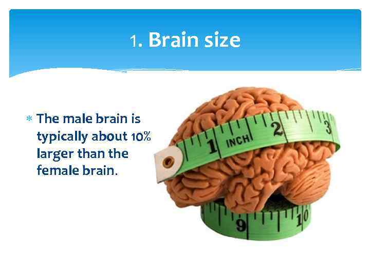 1. Brain size The male brain is typically about 10% larger than the female