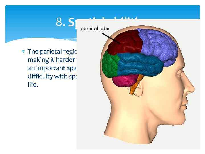 8. Spatial abilities The parietal region is thicker in the female brain, making it