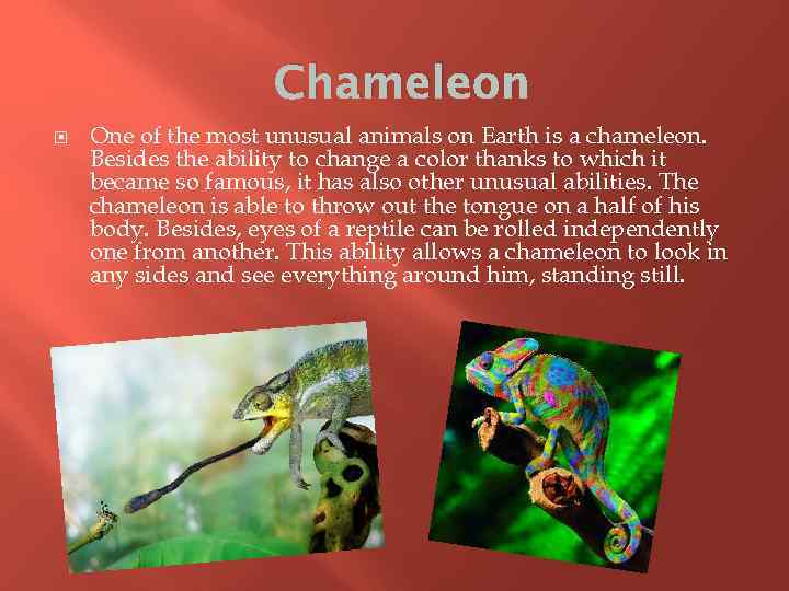 Chameleon One of the most unusual animals on Earth is a chameleon. Besides the
