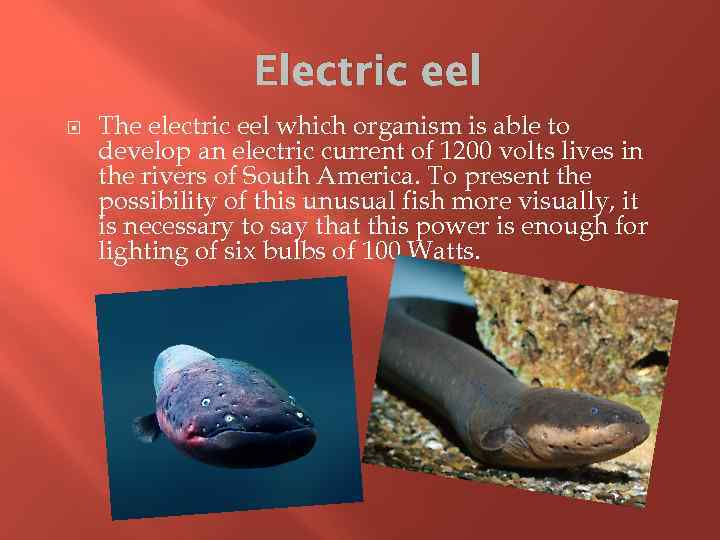 Electric eel The electric eel which organism is able to develop an electric current