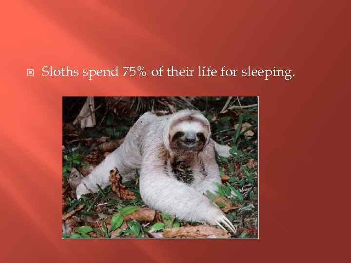 Sloths spend 75% of their life for sleeping.