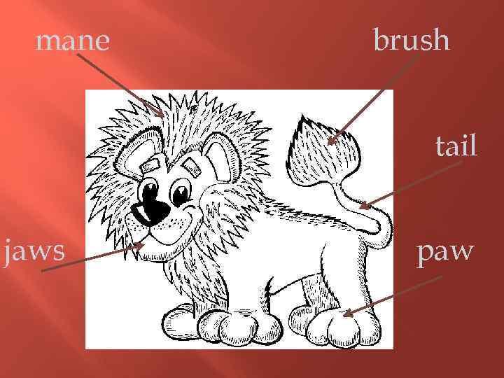 mane brush tail jaws paw