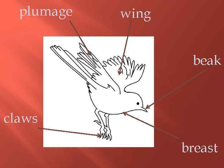 plumage wing beak claws breast