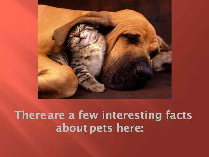 There a few interesting facts about pets here: