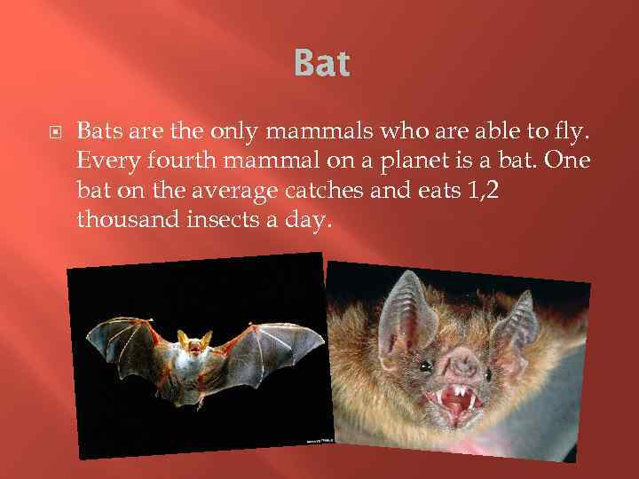 Bat Bats are the only mammals who are able to fly. Every fourth mammal