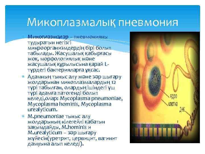 Микоплазмалық пневмония Микоплазмалар – пневмонияны тудыратын негізгі микроорганизмдердің бірі болып табылады. Жасушалық қабырғасы жоқ,