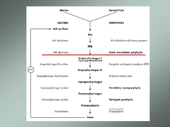 Hydroxymethylbilane Erythropoeitic