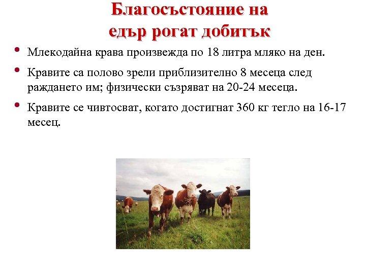 Благосъстояние на едър рогат добитък • • Млекодайна крава произвежда по 18 литра мляко