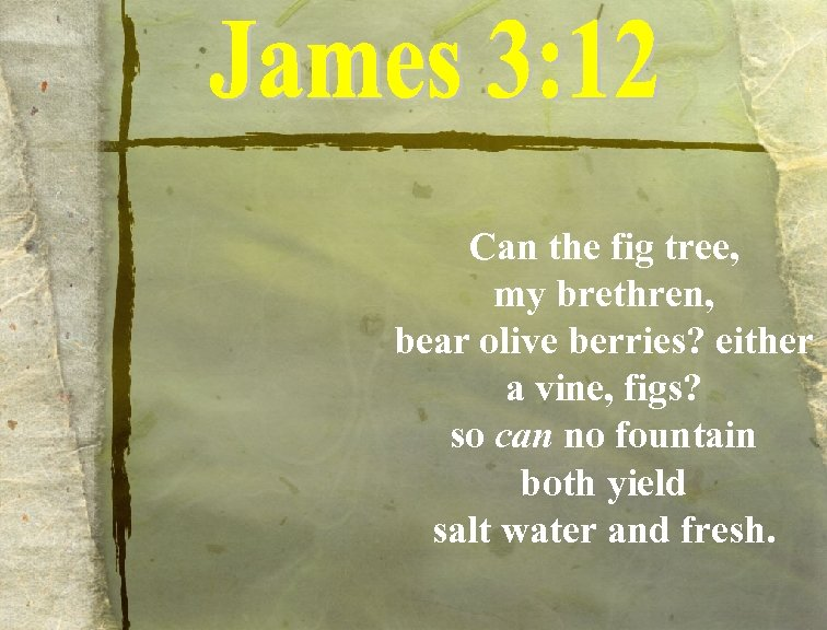 Can the fig tree, my brethren, bear olive berries? either a vine, figs? so