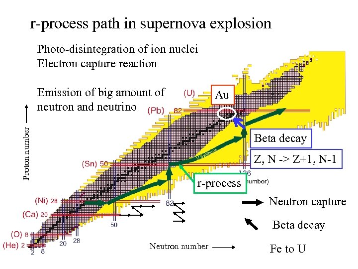r-process path in supernova explosion Photo-disintegration of ion nuclei Electron capture reaction Proton number