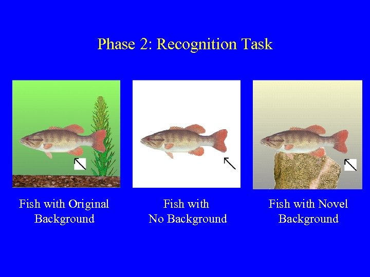 Phase 2: Recognition Task Fish with Original Background Fish with Novel Background