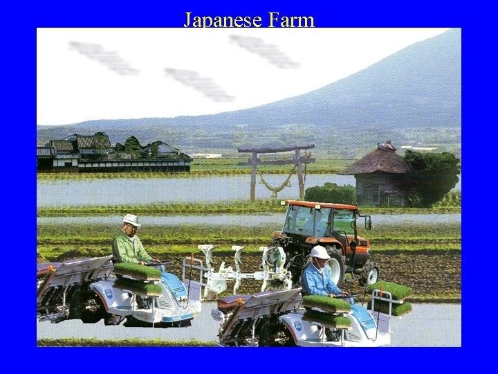 Japanese Farm