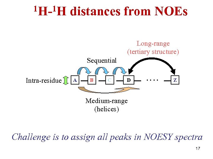 1 H-1 H distances from NOEs Long-range (tertiary structure) Sequential Intra-residue A B C