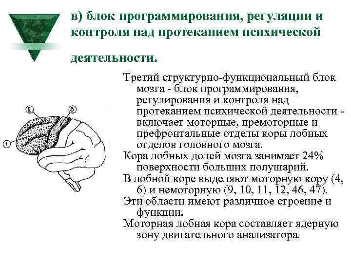 в) блок программирования, регуляции и контроля над протеканием психической деятельности. Третий структурно функциональный блок
