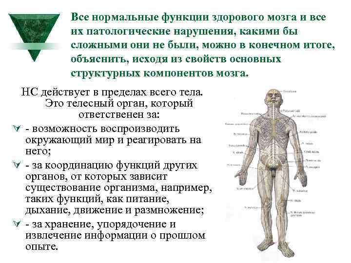 Все нормальные функции здорового мозга и все их патологические нарушения, какими бы сложными они