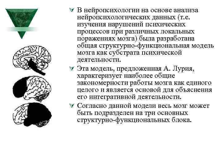 Ú В нейропсихологии на основе анализа нейропсихологических данных (т. е. изучения нарушений психических процессов