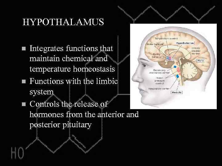 HYPOTHALAMUS n n n Integrates functions that maintain chemical and temperature homeostasis Functions with