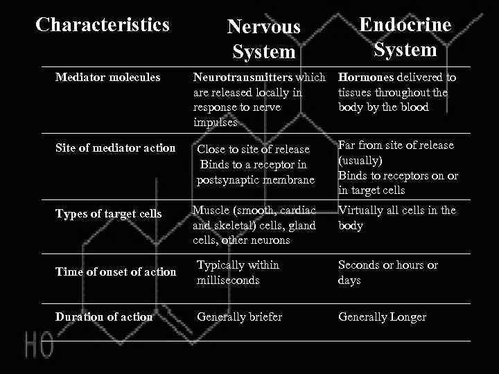 Characteristics Endocrine System Nervous System Mediator molecules Neurotransmitters which Hormones delivered to are released