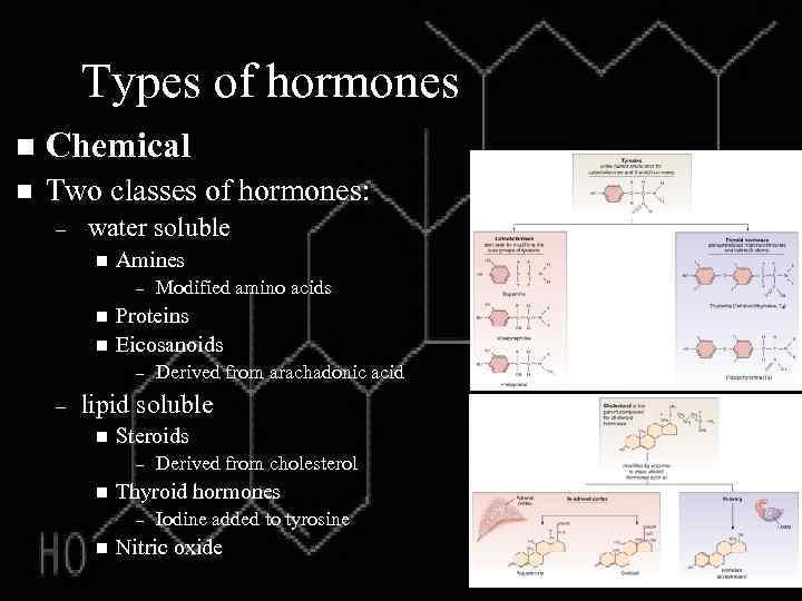 Types of hormones n Chemical n Two classes of hormones: – water soluble n