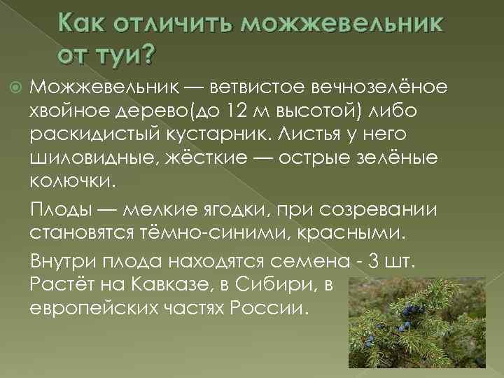 Mожжевельник в жизни и в деревообработке | 540x720
