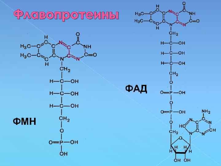 Флавопротеины ФАД ФМН