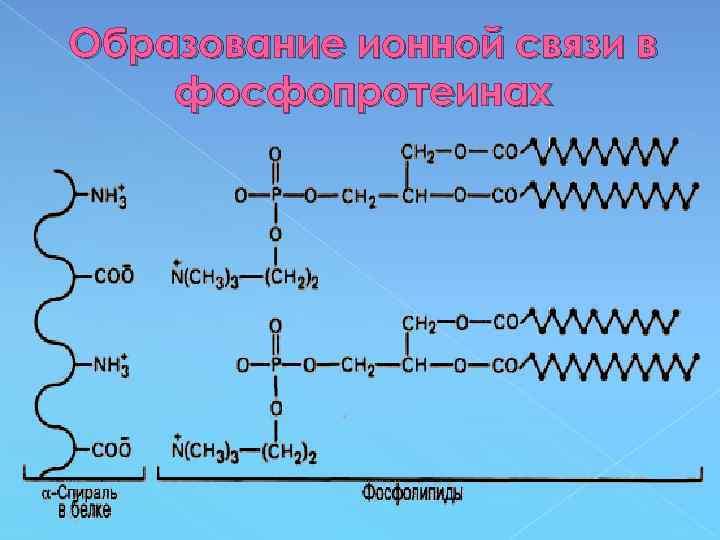 Образование ионной связи в фосфопротеинах