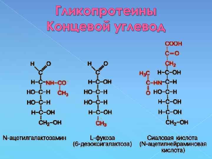 Гликопротеины Концевой углевод