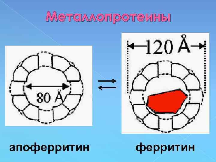 Металлопротеины апоферритин