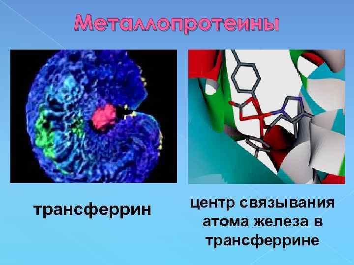 Металлопротеины трансферрин центр связывания атома железа в трансферрине