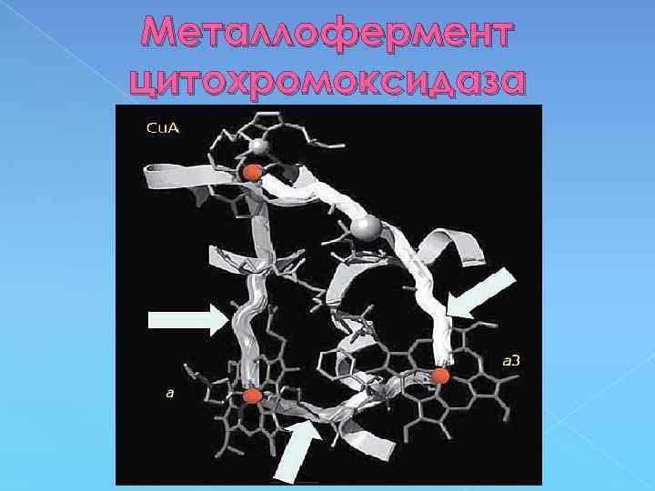 Металлофермент цитохромоксидаза