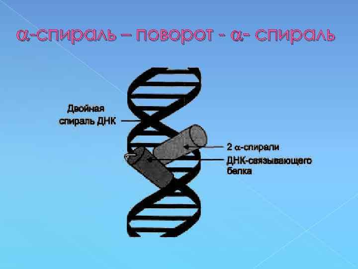 -спираль – поворот - - спираль