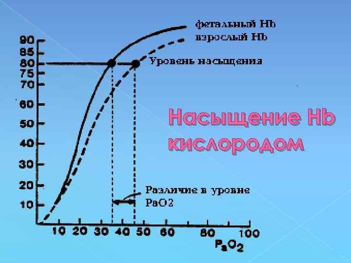 Насыщение Нb кислородом
