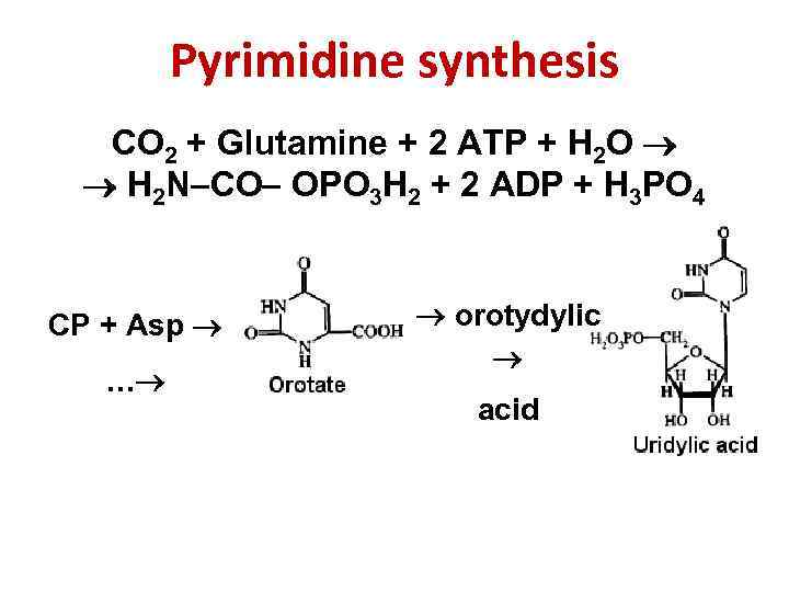 Amino acid synthesis is the set of biochemical processes metabolic pathways by which the various amino acids are produced from other compounds