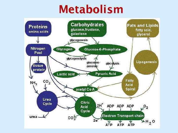 Izbjegavajte metabolizam