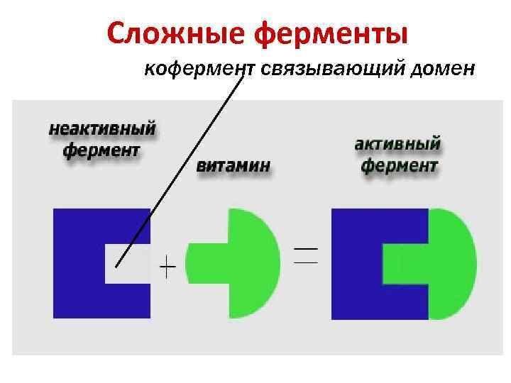 Сложные ферменты кофермент связывающий домен