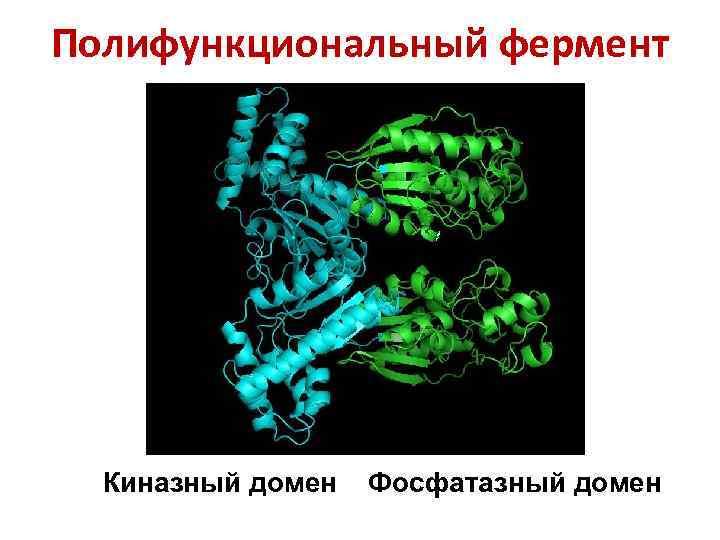Полифункциональный фермент Киназный домен Фосфатазный домен