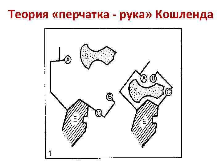Теория «перчатка - рука» Кошленда